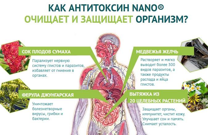 Состав препарата Антитоксин Нано (Anti Toxin Nano)
