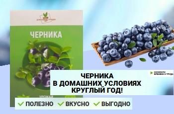 Домашняя ягодница «ЧЕРНИКА». Отзывы реальные покупателей и специалистов