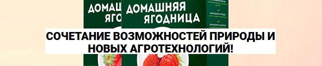 Домашняя ягодница - что это?