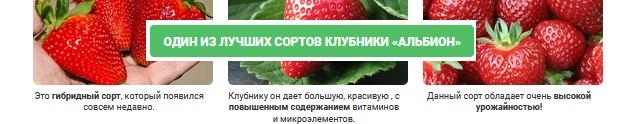 Клубника с домашней ягодницей круглый год!