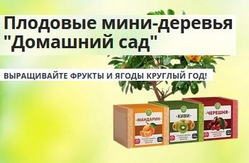 Плодовые мини-деревья Домашний сад. Отзывы развод или нет? Цена. Купить в горшках семена мандарина, киви и вишни
