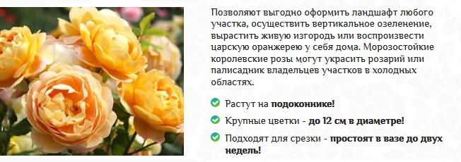 Почему королевские сорта живущее остальных роз?