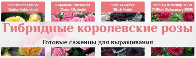 Свои цветы круглый год без затрат